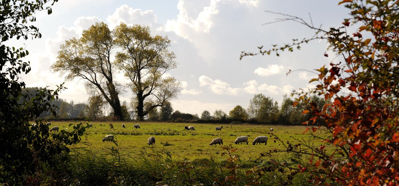 """Résultat de recherche d'images pour """"les laines du marquenterre"""""""